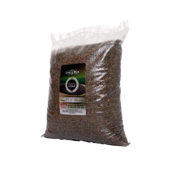 Gabah Hitam Live Rice