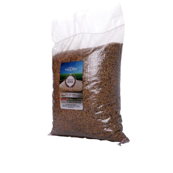 Gabah Putih Live Rice